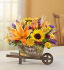 Harvest Wheel Barrowl Cottage Florist Lakeland Fl 33813 Premium Flowers lakeland