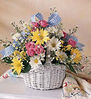 Breath Of Fresh Daisy's Cottage Florist Lakeland Fl 33813 Premium Flowers lakeland
