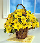 Grape Vine Daisy Basket Cottage Florist Lakeland Fl 33813 Premium Flowers lakeland