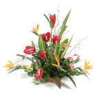 Tropical Escape Cottage Florist Lakeland Fl 33813 Premium Flowers lakeland