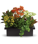 Stylish Plant Assortment Cottage Florist Lakeland Fl 33813 Premium Flowers lakeland