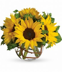 Sunny Sunflowers Cottage Florist Lakeland Fl 33813 Premium Flowers lakeland