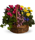 Blooming Garden Basket Cottage Florist Lakeland Fl 33813 Premium Flowers lakeland