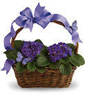 Violets And Butterflies Cottage Florist Lakeland Fl 33813 Premium Flowers lakeland