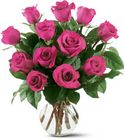 12 Hot Pink Roses Cottage Florist Lakeland Fl 33813 Premium Flowers lakeland