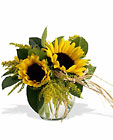 Sassy Sunflowers Cottage Florist Lakeland Fl 33813 Premium Flowers lakeland