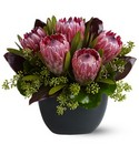 Positively Protea Cottage Florist Lakeland Fl 33813 Premium Flowers lakeland