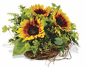 Nesting Sunflowers Premier Flowers from Cottage Florist, Lakeland Fl 33813