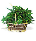 Large Basket Garden Cottage Florist Lakeland Fl 33813 Premium Flowers lakeland