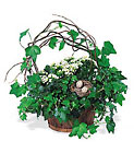 Kalanchoe and Ivy Basket Cottage Florist Lakeland Fl 33813 Premium Flowers lakeland
