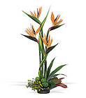 Bird of Paradise Cottage Florist Lakeland Fl 33813 Premium Flowers lakeland